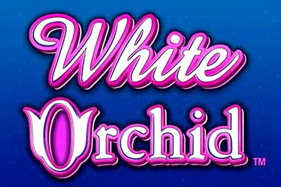 White Orchid Slots